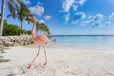 Adults only vakantie - Aruba